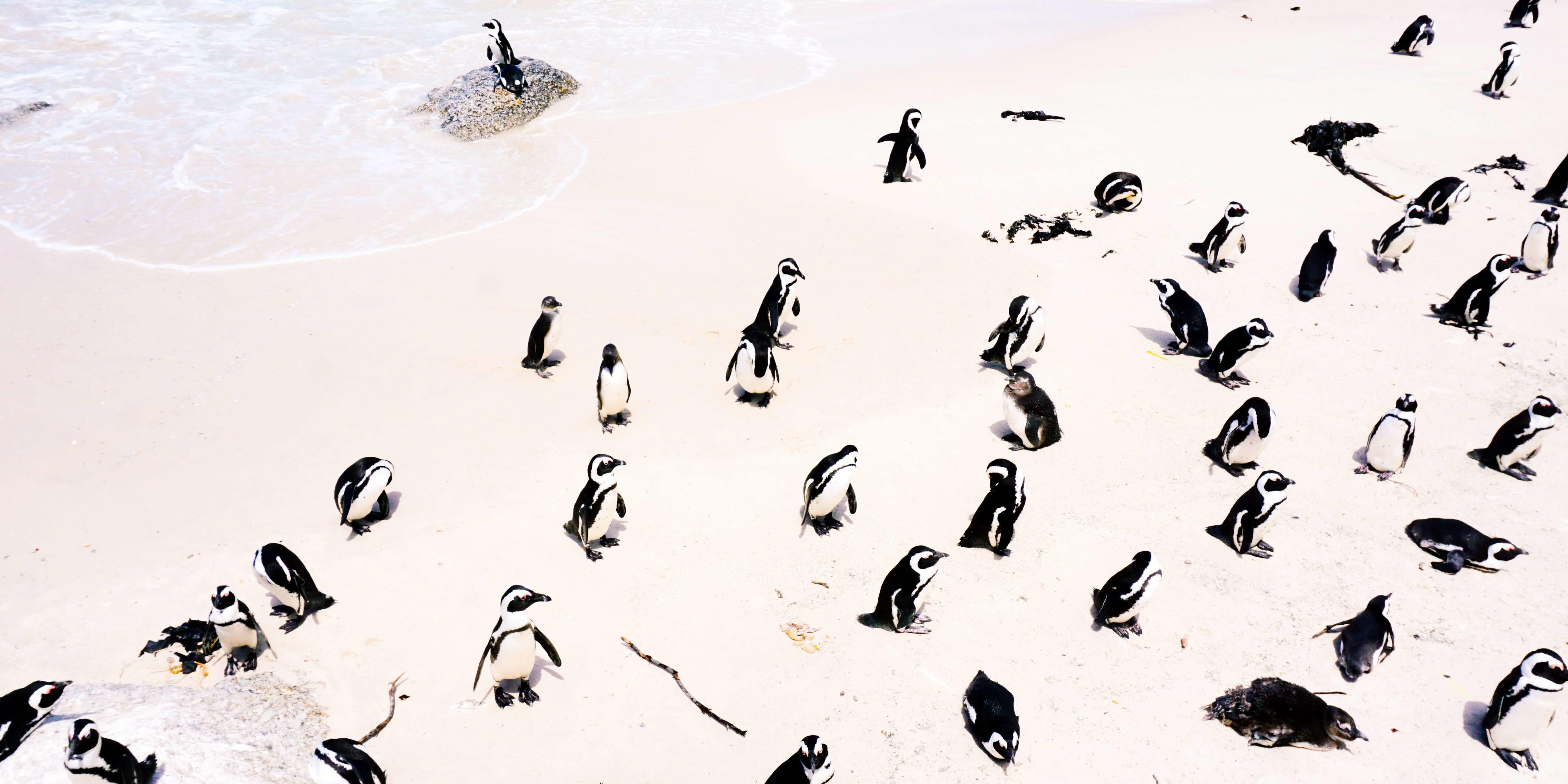 Google Penguin Update 3.0 zielt erneut auf Backlinks ab